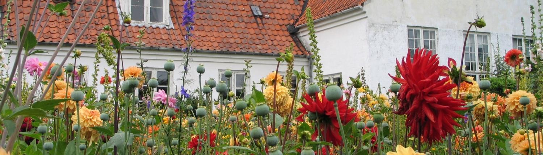 Blomster i Malergårdens have